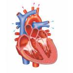 Astaxanthine kan van nut zijn in het terugdringen van kanker, hart- en vaatziekten, chronische ontstekingen, enz.
